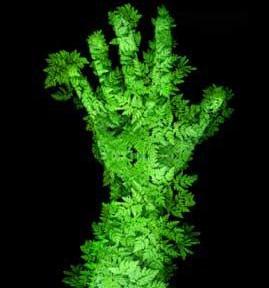 pollice-verde.jpg